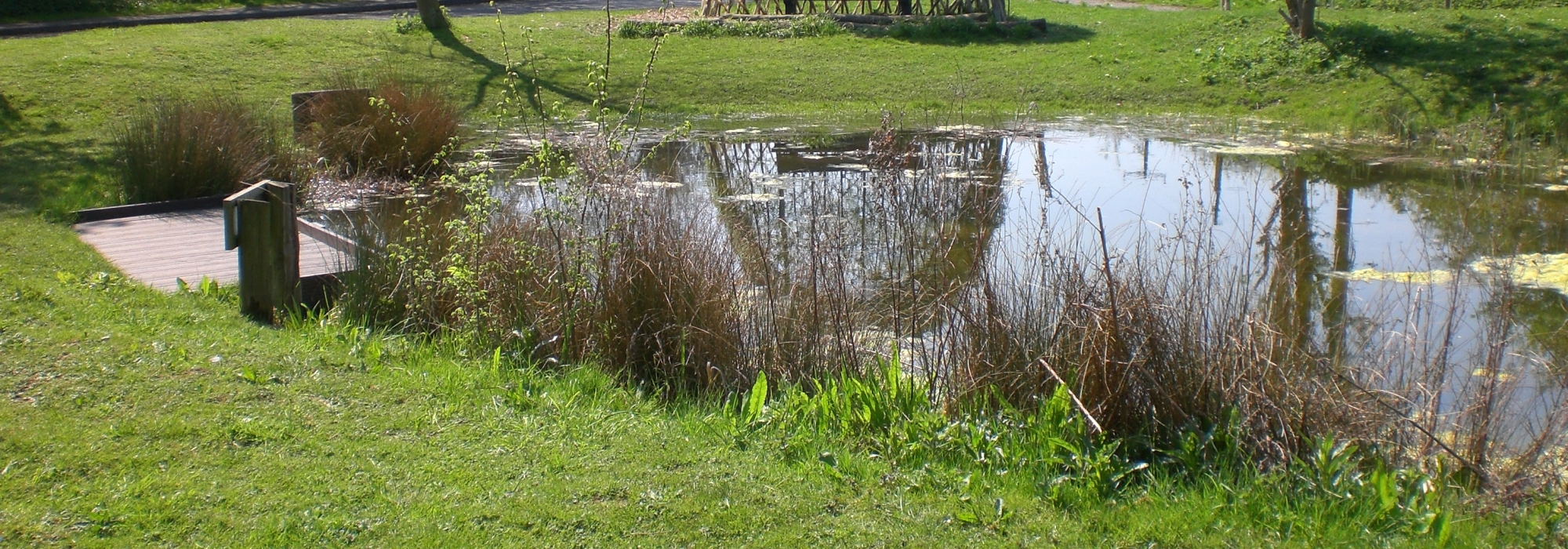 New Pond with Byer and pond dipping Platforn. LookingESE