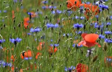 orange and purple flowers on green grass field